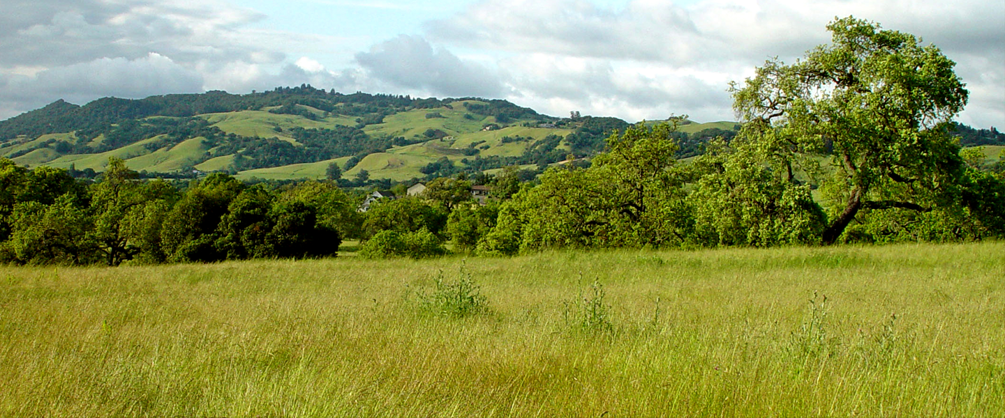 image of Sonoma skyline with lush hills and tall grass.